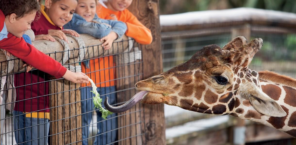 Кращі зоопарки України: куди поїхати