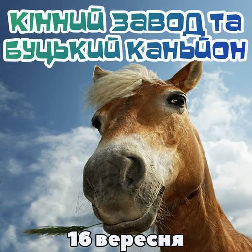 Byku 16