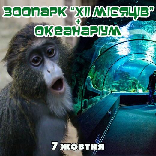 Zoo okean 7