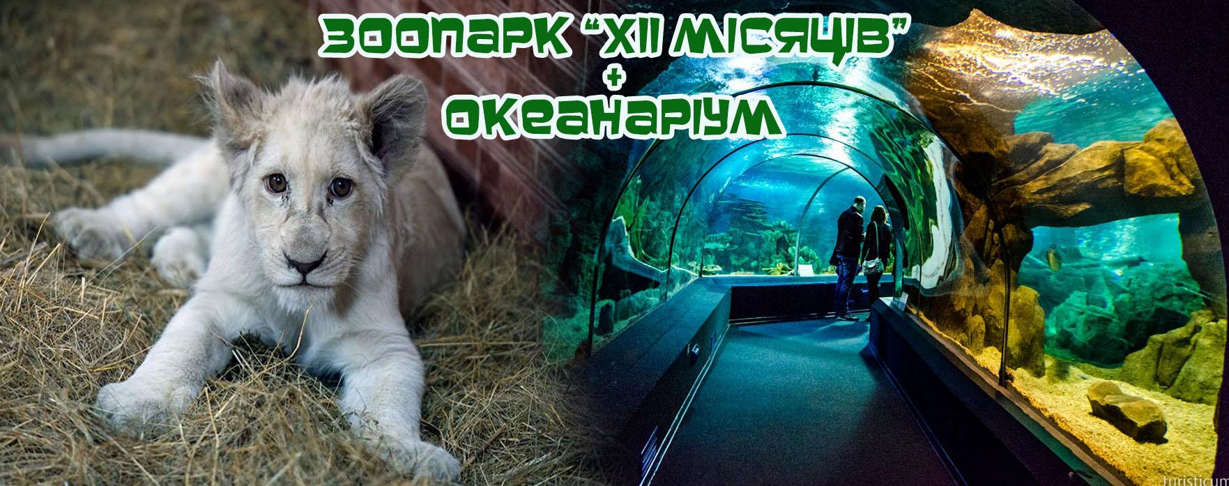 Zoo okean poster